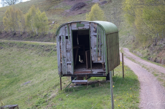 An abandoned farm trailer on the grazing land